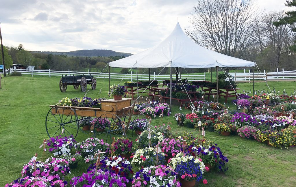 Farm stand in spring, with flowering plants