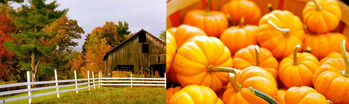 Fall colors and pumpkins at Fletcher Farm