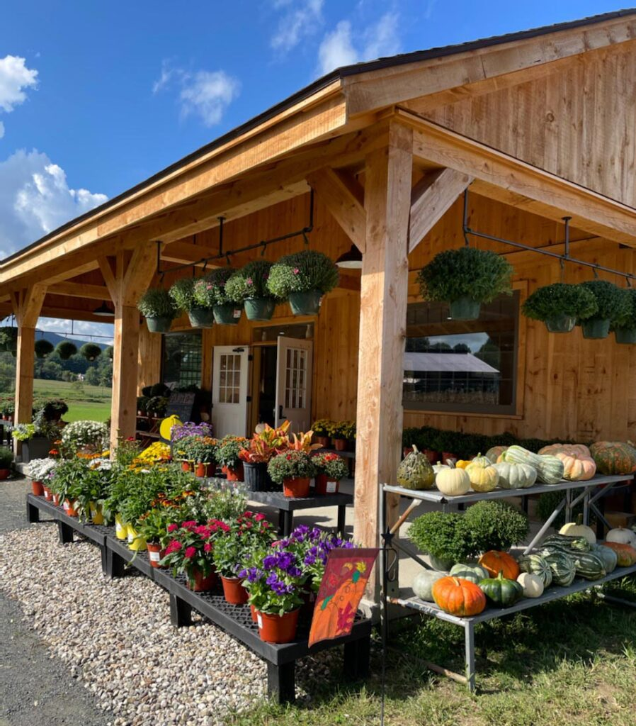 Farm stand in fall, with mums and pumpkins